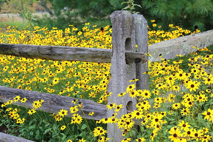 Flower Photograph - Golden-rod  Crowd Out by Deborah  Crew-Johnson