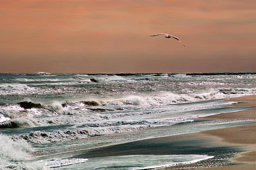 Seascape Photograph - Golden Shore by Steve Karol