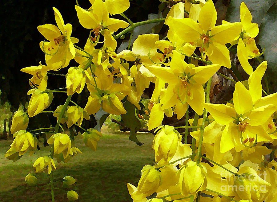 Hawaii Photograph - Golden Shower Tree by James Temple