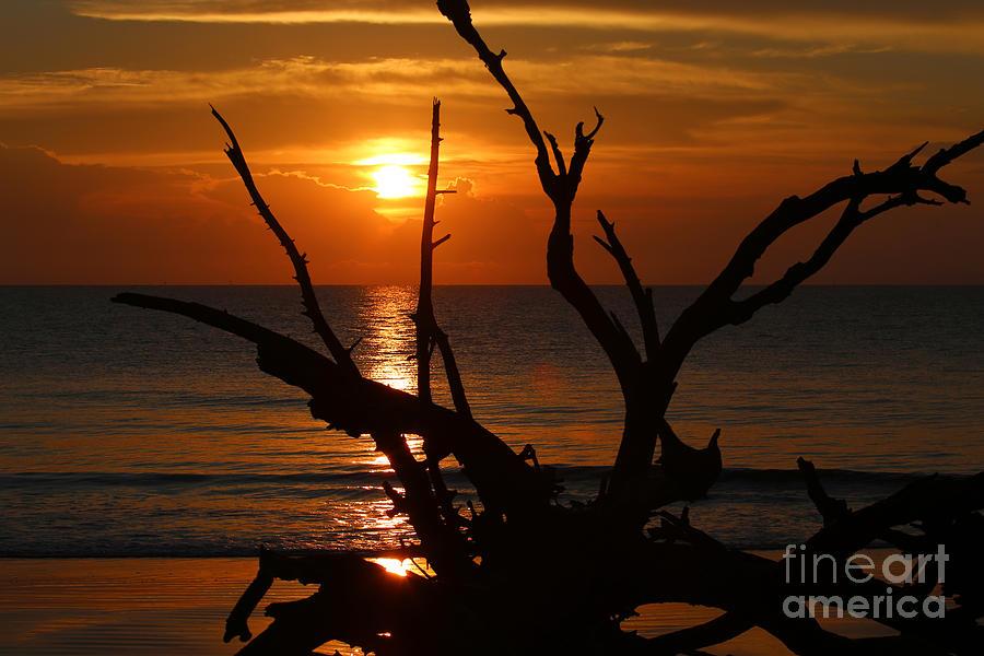 Jekyll Island Photograph - Golden Sky by Marty Fancy