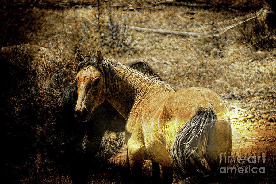 Golden Stallion Photograph
