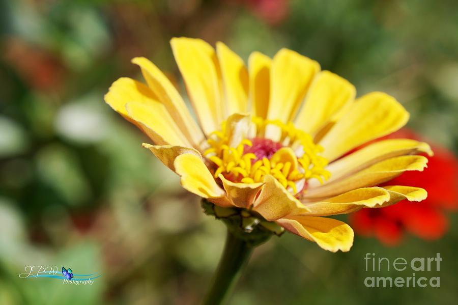 Golden Summer Beauty Photograph