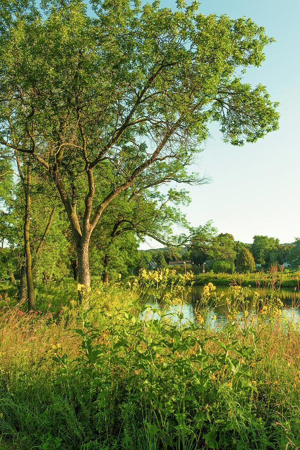 Golden Summer Morning by Richard Lund