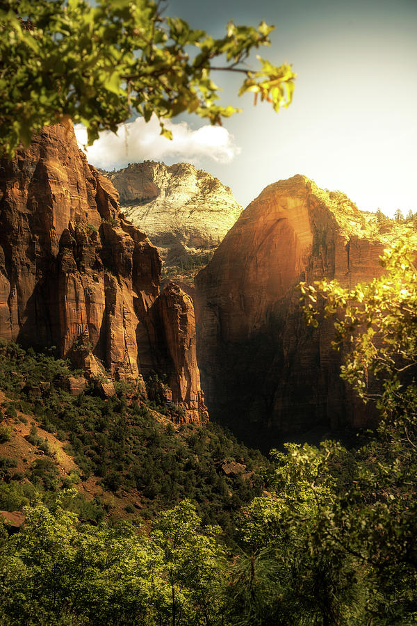 Golden Sunrise In Zion Canyon National Park Photograph