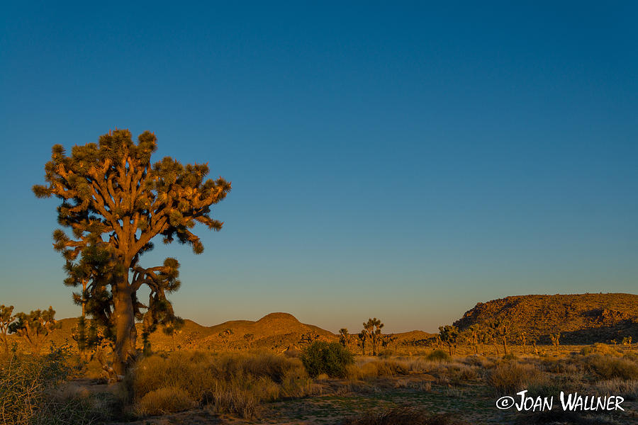 California Photograph - Golden Sunrise by Joan Wallner
