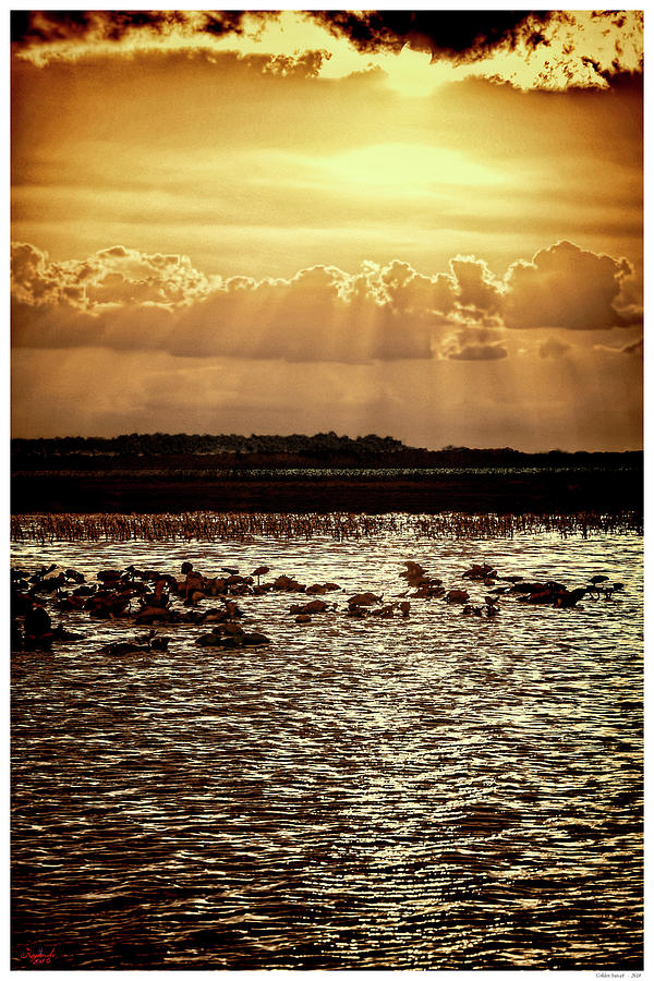 Florida Mixed Media - Golden Sunset by Rogermike Wilson