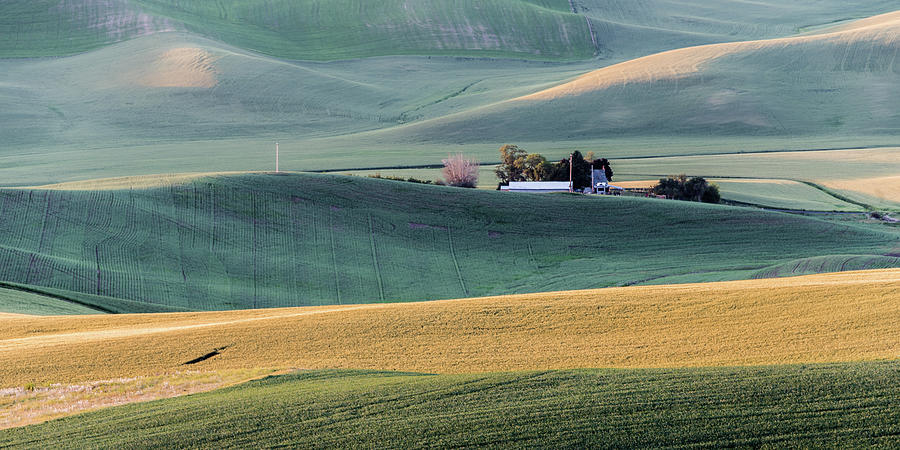 Golden Textures of the Palouse  by Daniel Ryan