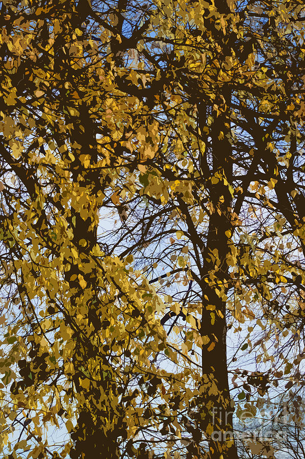 Autumn Photograph - Golden Tree 2 by Carol Lynch