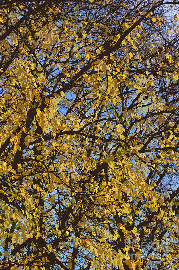 Autumn Photograph - Golden Tree 3 by Carol Lynch