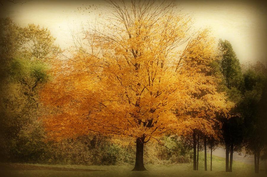 Landscape Photograph - Golden Tree by Sandy Keeton