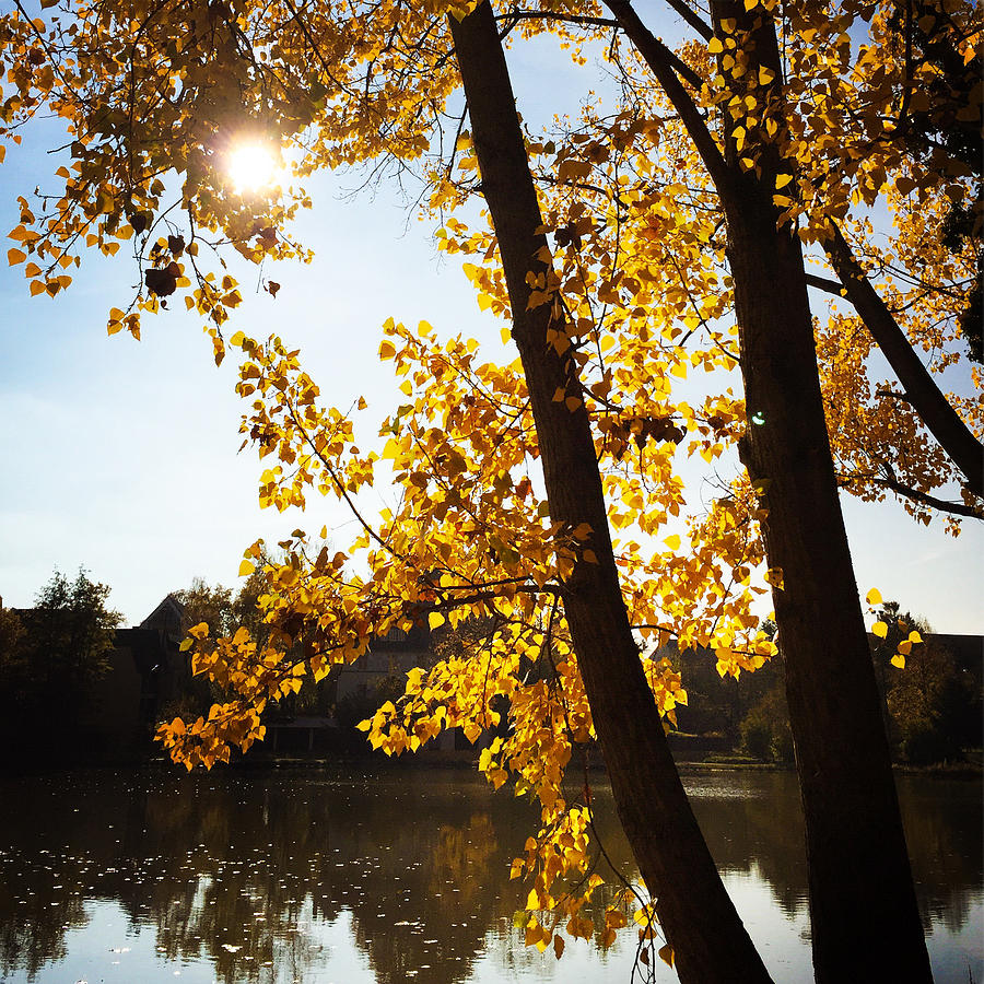 Tree Photograph - Golden Trees In Autumn Sindelfingen Germany by Matthias Hauser