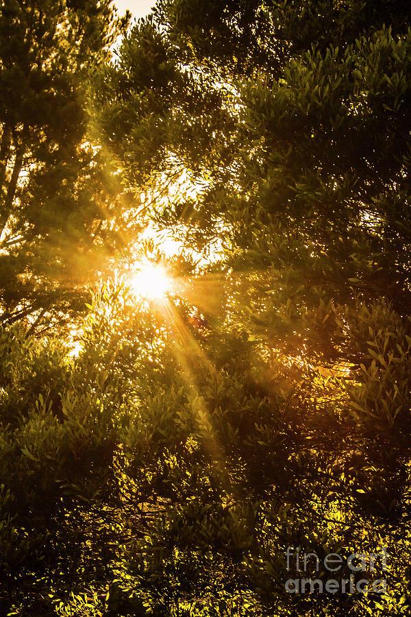 Nature Photograph - Golden Treetops by Jorgo Photography - Wall Art Gallery