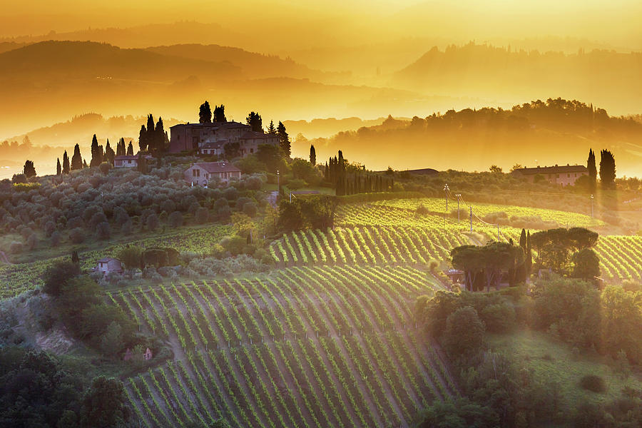 Italy Photograph - Golden Tuscany by Evgeni Dinev