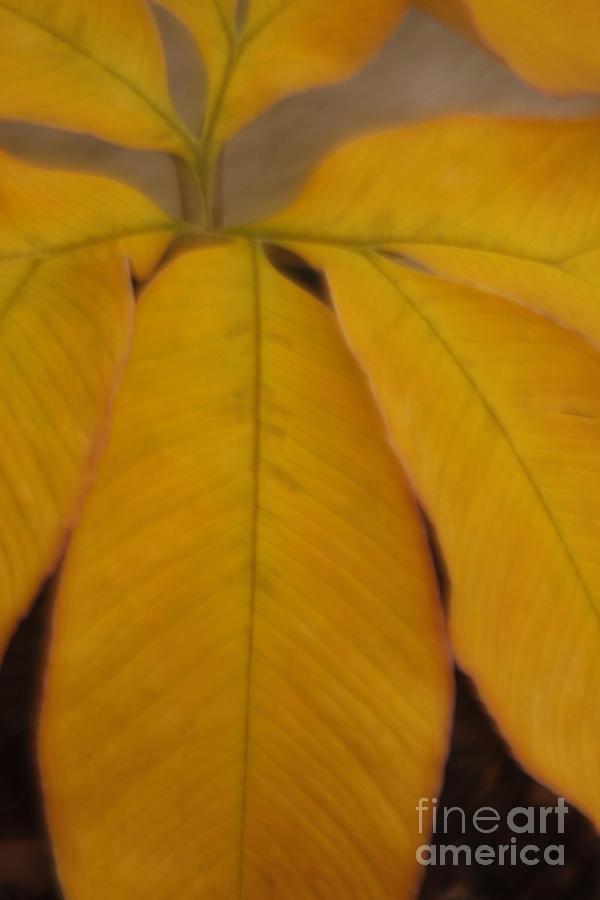Leave Photograph - Golden Umbrella by Katherine Morgan