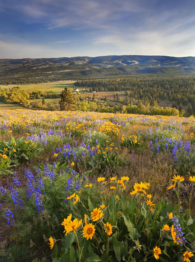 Wildflowers Photograph - Golden Valley by Mike  Dawson