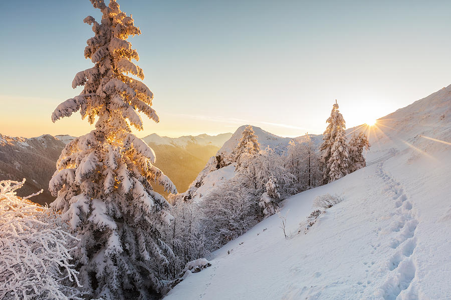 Balkan Mountains Photograph - Golden Winter by Evgeni Dinev