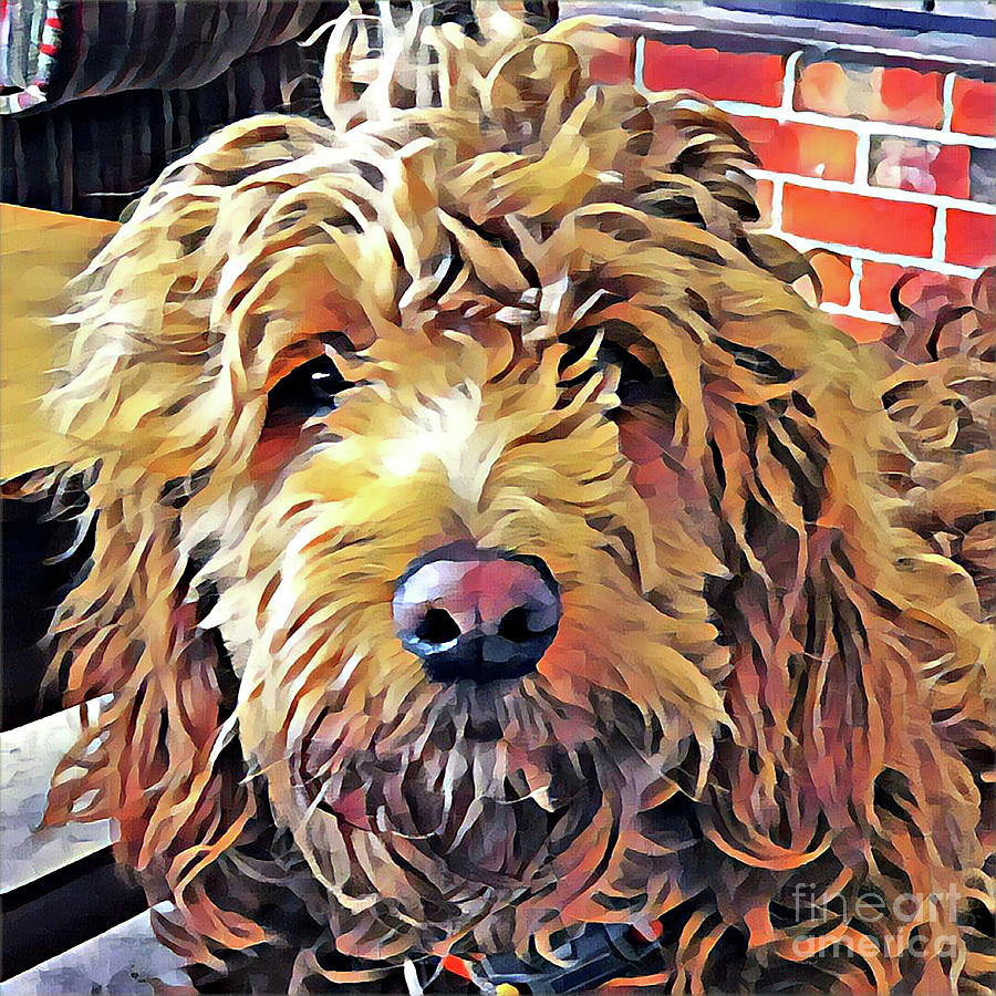 Goldendoodle Photograph - Goldendoodle Puppy by Christine Segalas