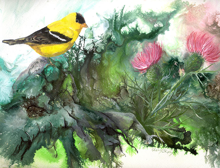 Bird Painting - Goldfinch by Sherry Shipley