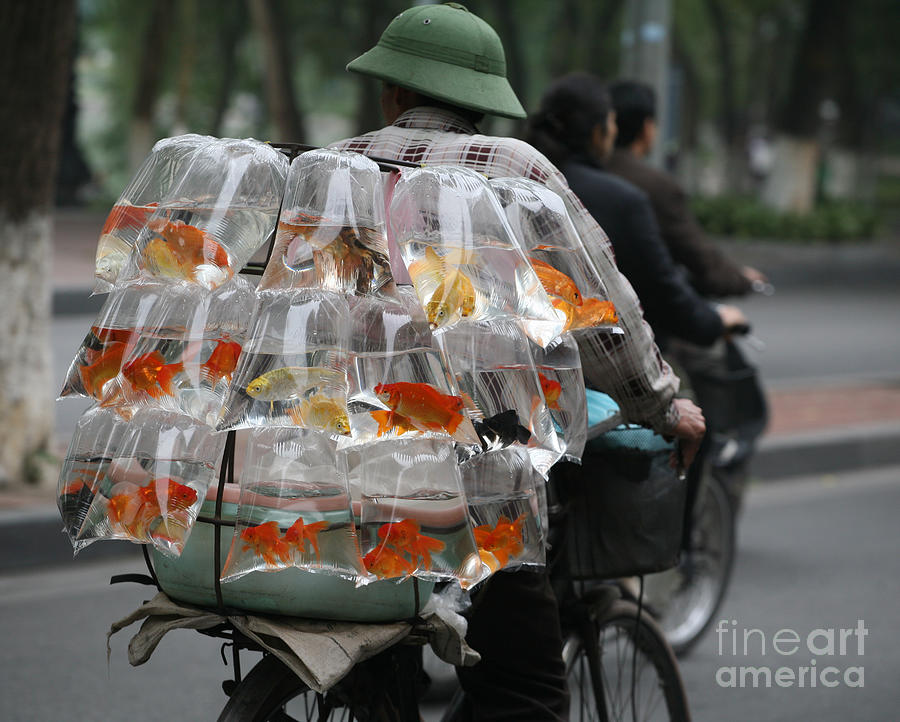 Vietnam Photograph - Goldfish In A Bag Vietnam On Bicycle Unique  by Chuck Kuhn