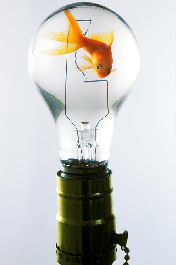 Fish Photograph - Goldfish In Light Bulb  by Garry Gay