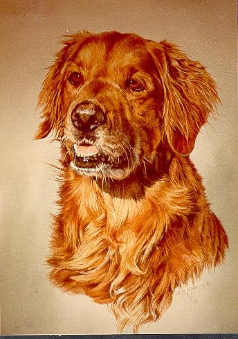 Dog Portrait Painting - Goldie by Judith Angell Meyer