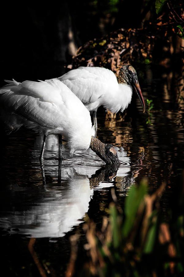 Stork Photograph - Gone Fishing by Cyndy Doty