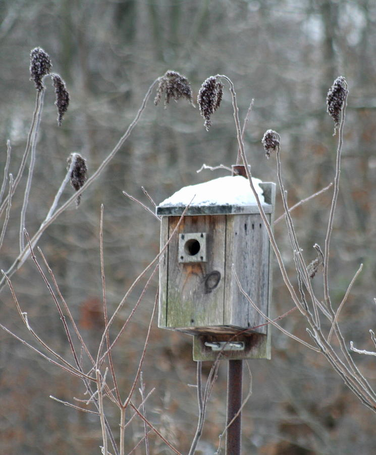 Bird House Photograph - Gone South by Diane Merkle