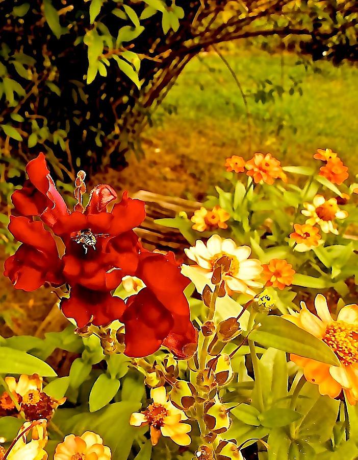 Red Flowers Photograph - Gone Wild by Elizabeth Tillar
