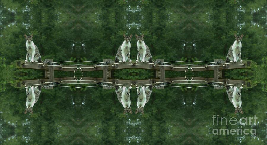 Animal Photograph - Goober Reflectoscope by Donna Brown