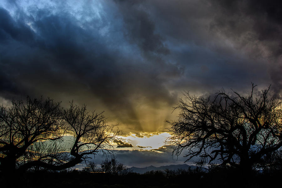 Good Evening Eden Photograph