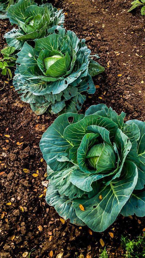 Food Photograph - Good Greens by Noun Images