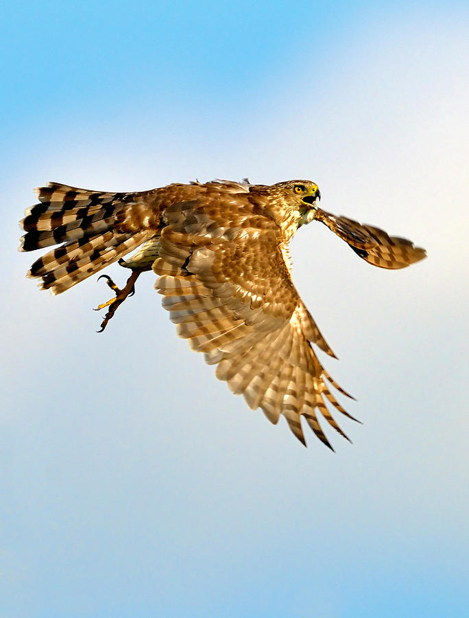 Good Hawk Hunting by William Jobes