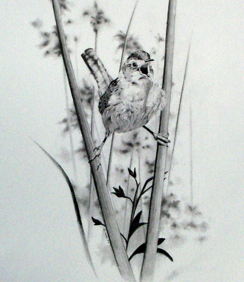 Birds Drawing - Good Mornin by Stan White