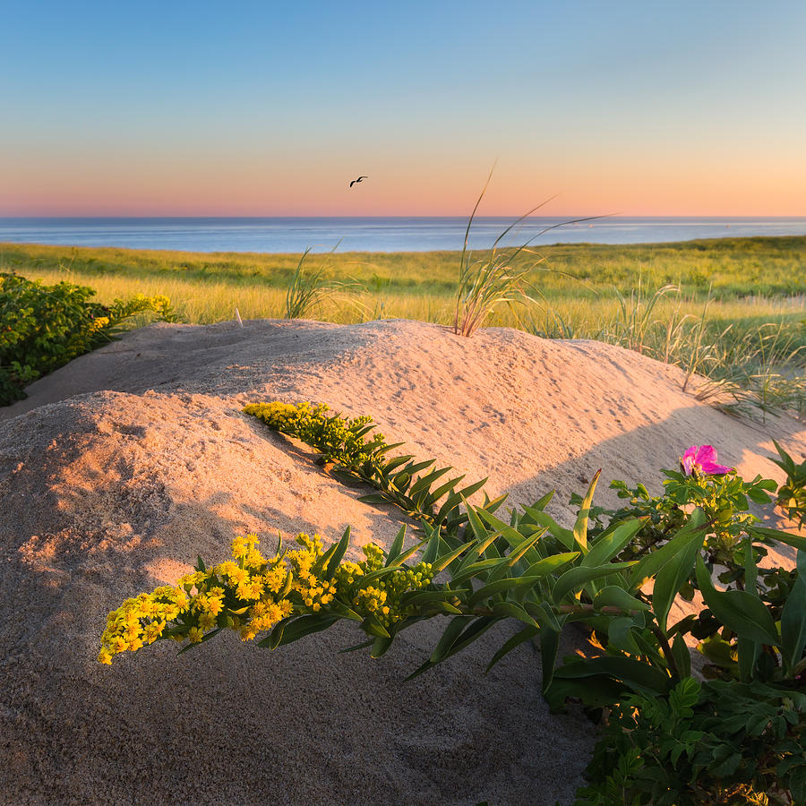 Good Morning Cape Cod Photograph By Bill Wakeley