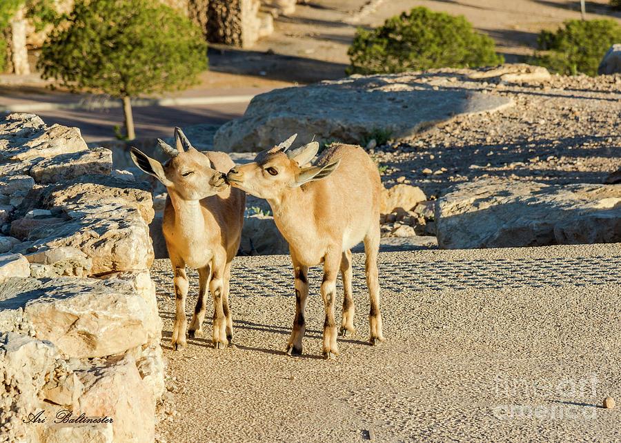 Good morning kiss by Arik Baltinester