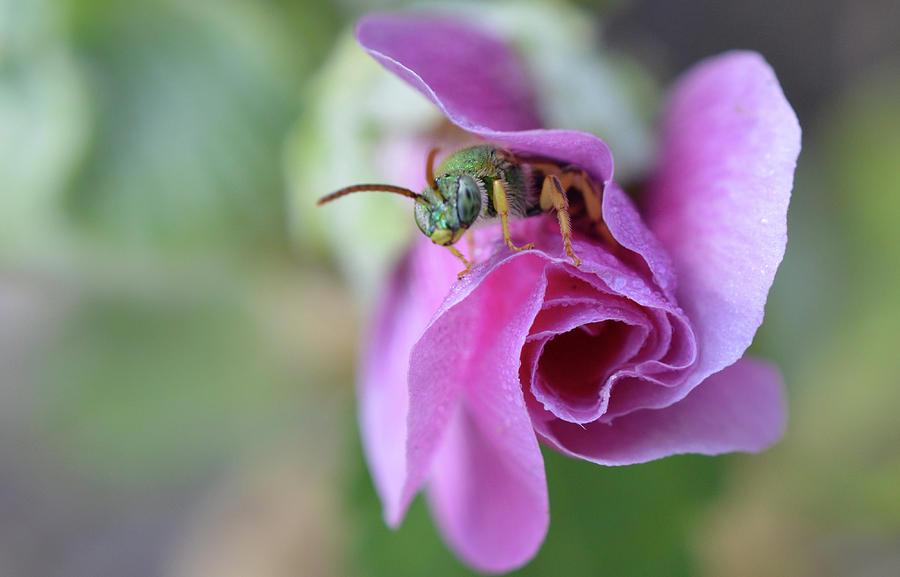 Garden Photograph - Good Morning by MHmarkhanlon