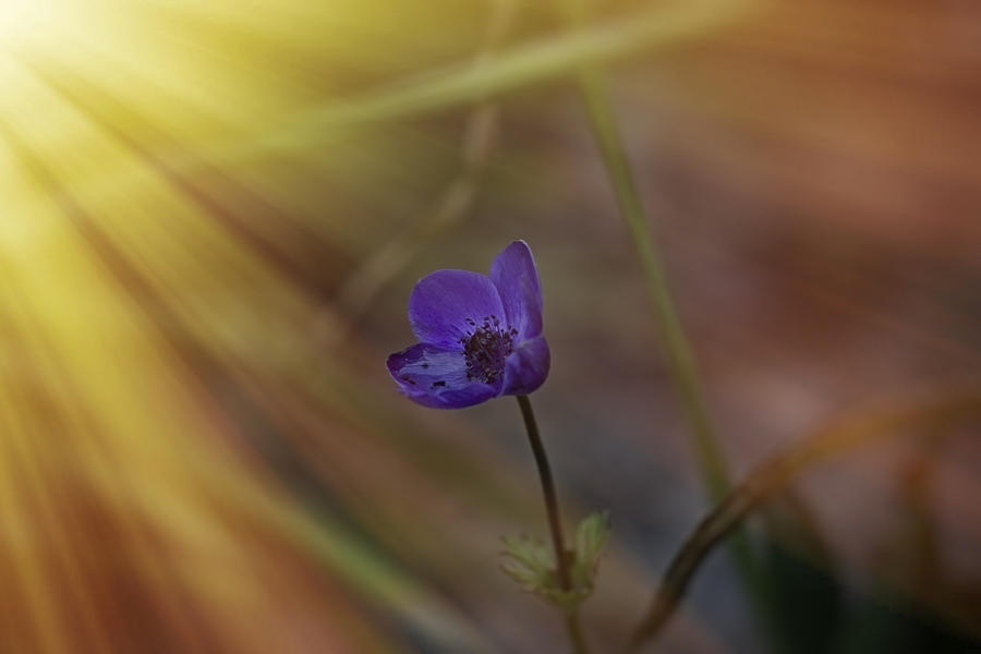 Angela A Stanton Photograph - Good Morning Sunshine On Blue by Angela Stanton