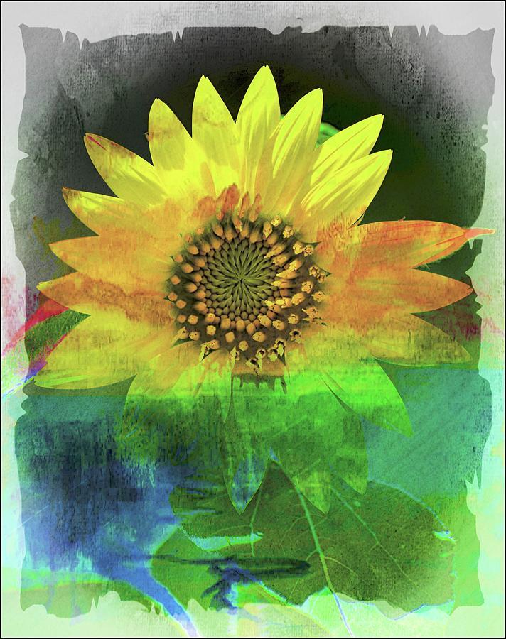 Sunflower Photograph - Good Morning Sunshine by Sheri McLeroy