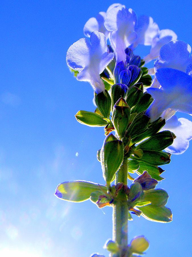 Blue Flower Photograph - Good Morning Sunshine by Sherwanda Irvin
