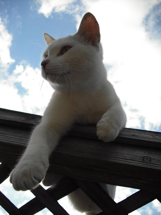 Cat Photograph - Goodbye Blue Sky by Mandy Shupp