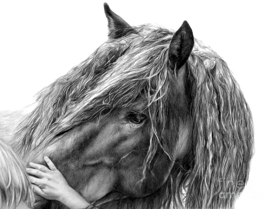 Equine Drawings Drawing - Goodwill And Harmony by Sheona Hamilton-Grant