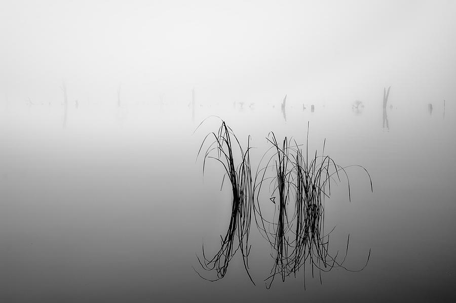 Mist Photograph - Goonoo Goonoo by Mihai Florea