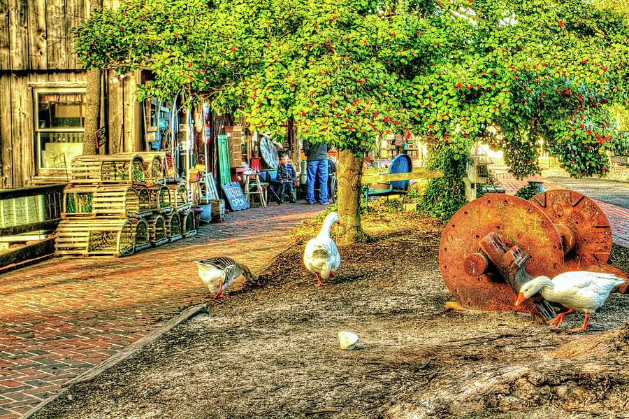 Country Goose Decor