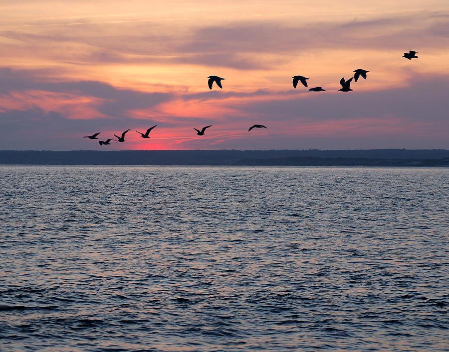 Beach Photograph - Gooseberry Gulls by Mark Wiley