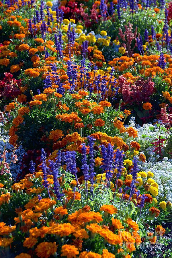 Gorgeous Garden by Patrick Witz