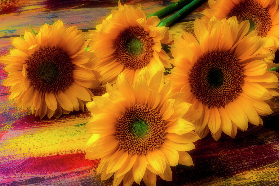 Five Photograph - Gorgeous Lovely Sunflowers by Garry Gay