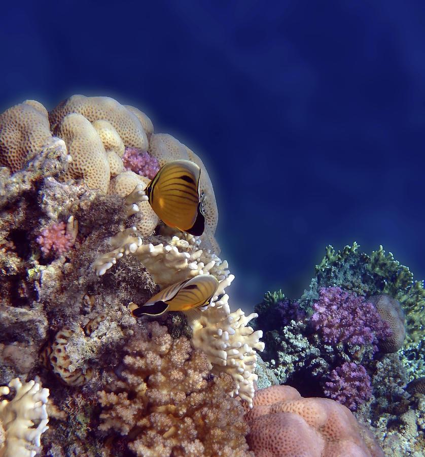 Gorgeous Red Sea Underwater World 3 by Johanna Hurmerinta