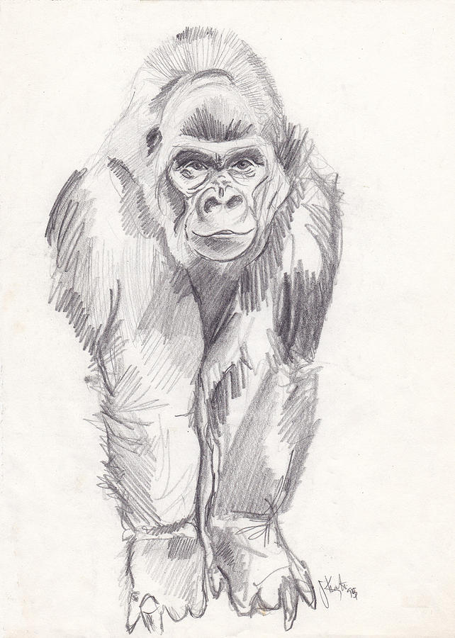 It is an image of Wild Picture Of Gorilla Drawing A Picture