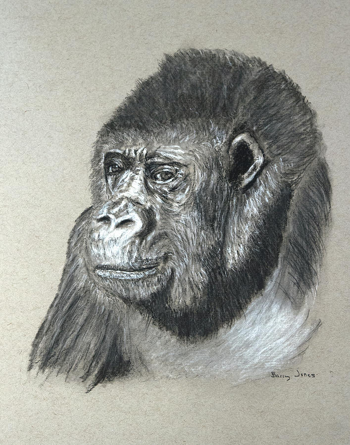 Gorilla Drawing - Gorilla - Wildlife Art by Barry Jones
