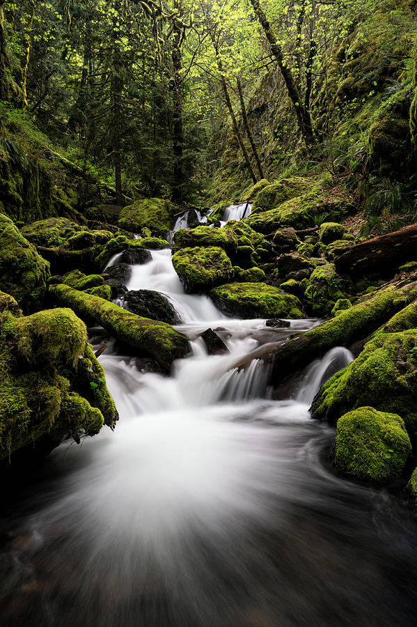 Columbia River Gorge Photograph - Gorton Creek by Brian Bonham